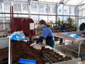 Travaux pratiques de multiplication des végétaux avec les secondes professionnelles Conduite de Productions Horticoles
