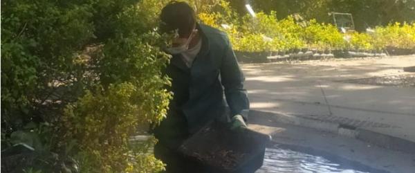 Phyto-épuration et conservation de la biodiversité au Lycée Honoré de Balzac