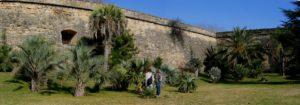 Visite de la palmeraie au pied de la citadelle Joffre de Montpellier